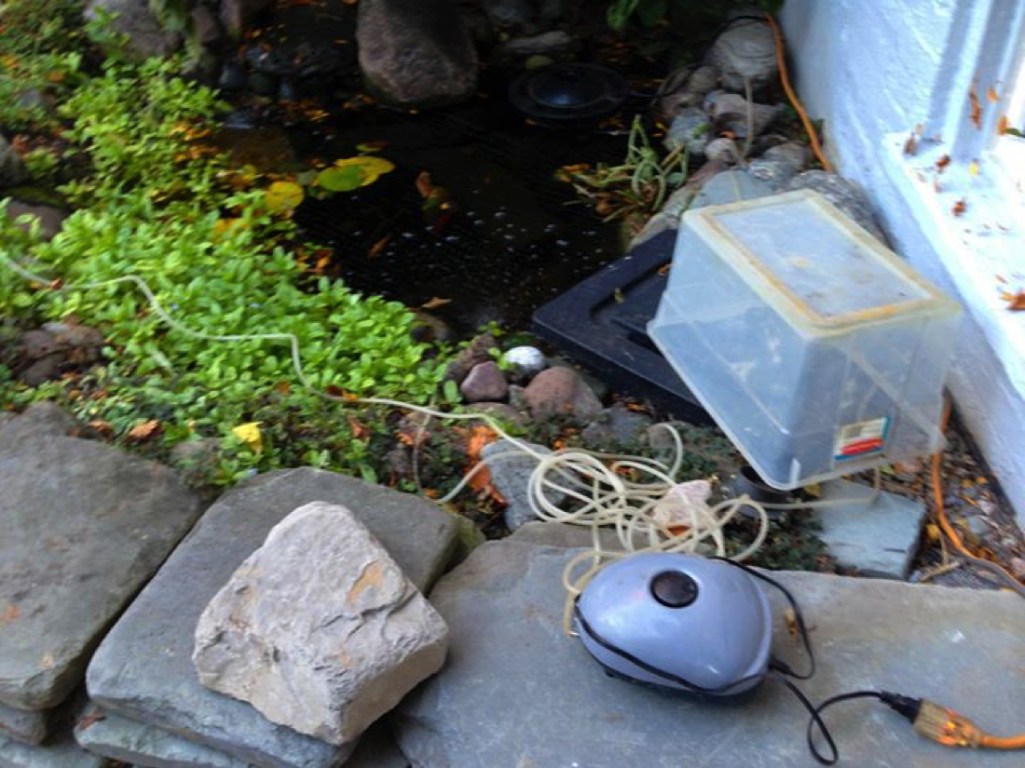 Pond aeration system or re circulating pumps waterhouse for Fish pond preparation