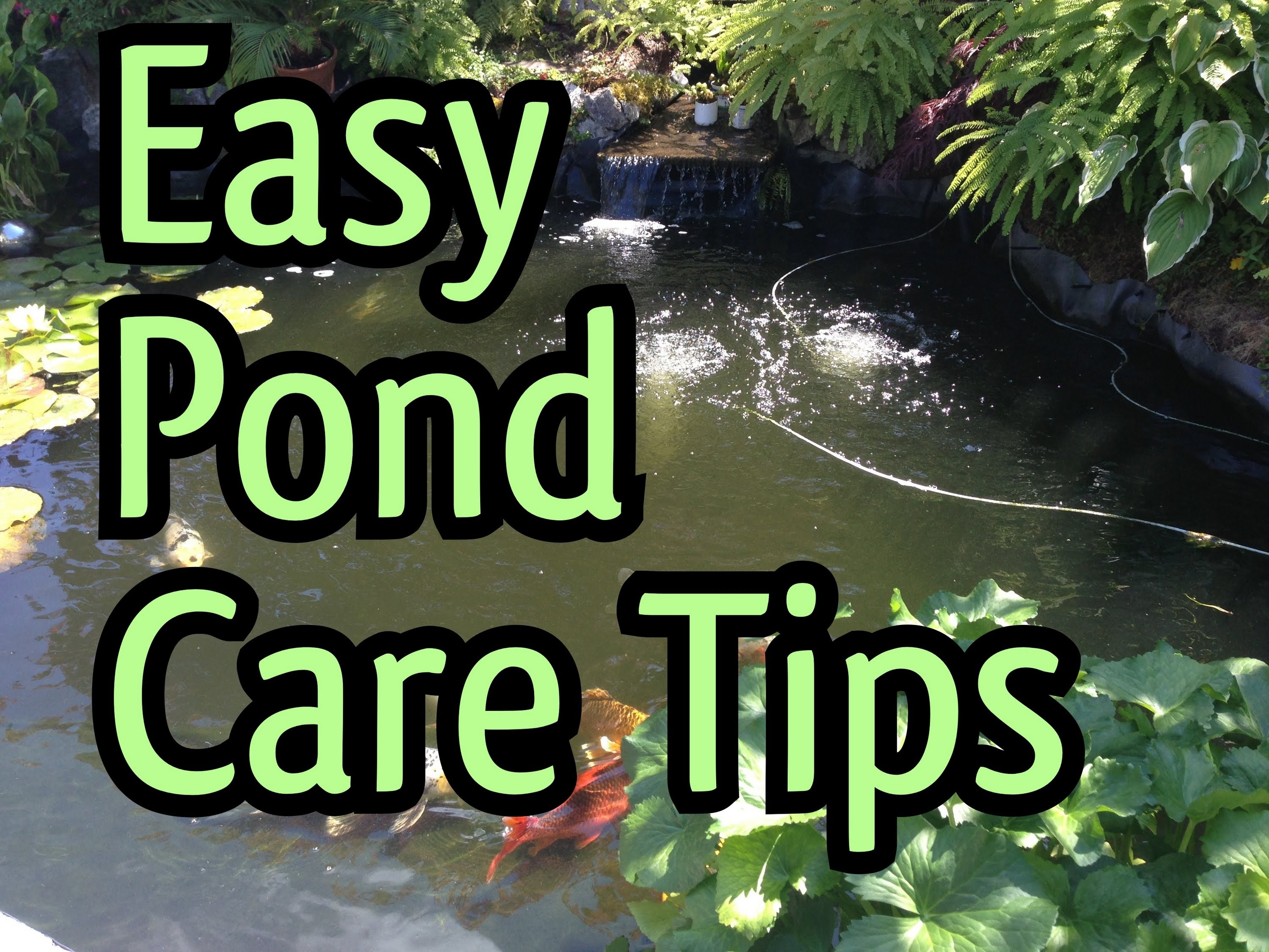 Maintaining your pond pump waterhouse for Koi pond maintenance service